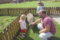 Family at a farm dad and children petting zoo or with playing with pig chickens Royalty Free Stock Photo