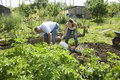 Family gardening together in community garden boy with mother and grandfather Stock Image