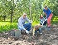 Family Harvesting Potatoes In ...