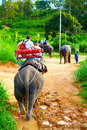 Family having exciting journey elephant trekking funny Royalty Free Stock Images