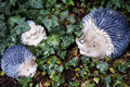 A family of hedgehogs Royalty Free Stock Photo