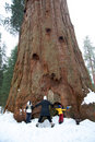 Family hugging a giant sequoia tree Royalty Free Stock Photography