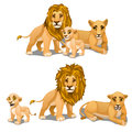 Family of lions, mother, father and baby. Vector