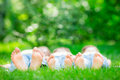 Family lying on grass outdoors in spring park Royalty Free Stock Image