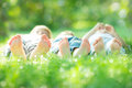 Family lying on green grass Royalty Free Stock Photo