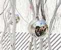 Family is mirroring in christmas white painted branches give a harmonic background with chrismas tree balls and of a Royalty Free Stock Images