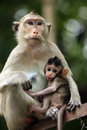 Family of monkeys sihanoukville cambodia Stock Photos