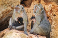 Family of monkeys sitting on the stones Stock Photography