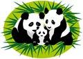 Family Panda Bears Royalty Free Stock Photo