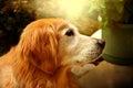 Family pet Royalty Free Stock Photo