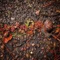 Family of snails Royalty Free Stock Photo