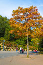 Family strolling in autumn park south korea oct anonymous a during the colourful season at south korea on october Royalty Free Stock Images