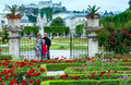Family summer gardens mirabell palace red rose flowerbeds hohensalzburg fortress behind salzburg austria all people behind not Royalty Free Stock Photo
