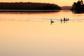 Family of swans swimming during early morning Stock Photos