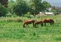 Family of three horses Royalty Free Stock Photo