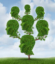 Family tree and community network as a social and business relationship concept as a plant shaped as a group of connected human Royalty Free Stock Photo