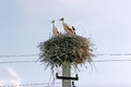 Family of two storks in the nest are built on electric poles Royalty Free Stock Photo
