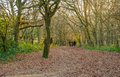 Family walking in the forest on a winter& x27;s afternoon. Royalty Free Stock Photo