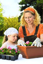 Young woman and little girl gardening in spring, planting flower seedlings, smiling mother and her happy child working in garden Royalty Free Stock Photo