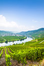 Famous moselle sinuosity with vineyards in trittenheim germany Stock Photos