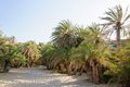 Famous palm beach of Vai, island of Crete, Greece Royalty Free Stock Image