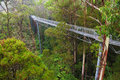 Famous rainforest in rain the steel walkway otway fly the up to meters above ground level great ocean road australia Stock Photography