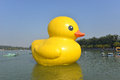 The famous rubber duck is exhibited at the summer palace beijing october designed by dutch artist florentijn hofman on october in Stock Photo