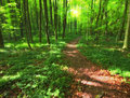 The famous saturated Danish forest in springtime Royalty Free Stock Photography