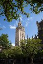 The famous sevillan giralda is framed by trees on a beautiful day Stock Photography