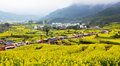 It is a famous view in china canola flower terraces in wuyuan jiangxi province canola flowers are blooming in huge terraces some Stock Photos