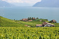 Famous vineyards in lavaux against geneva lake switzerla region switzerland Royalty Free Stock Images