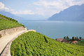 Famous vineyards in lavaux region switzerland against geneva lake Stock Image