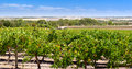 Famous wine region barossa valley near adelaide south australia Stock Photos