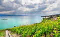 Famouse vineyards in Geneva lake Royalty Free Stock Image