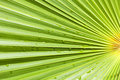 Fan palm leaf background of with rain drops Royalty Free Stock Photos
