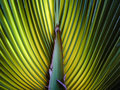 Fan palm with sunlight californian backlit Stock Image