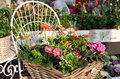 Fancy flowershop a market with flowers in baskets and nice decorations Royalty Free Stock Photo