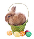 Fancy rabbit in the basket Royalty Free Stock Photos
