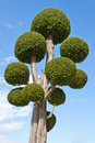 Fancy shaped decorative tree Royalty Free Stock Photos