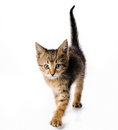 Fanny striped kitten Royalty Free Stock Photos