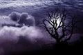 Fantasia sola dell albero Immagini Stock