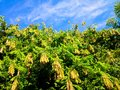 Fantastic leafs new with blue sky background Stock Photography