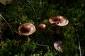 The fantastic mushroom glade in wood Royalty Free Stock Photo