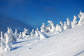 Fantastic snow sculptures winter snowy from trees on top of the mountain Stock Image
