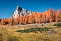 Fantastic sunny view of Dolomite Alps with yellow pine trees Royalty Free Stock Photo