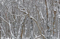 Fantastical patterns of snow covered trees Royalty Free Stock Image