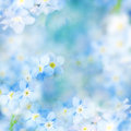 Fantasy Gentle Floral Background / Blue Flowers Defocused Royalty Free Stock Photo