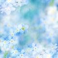 Fantázia jemný / modrý kvety rozostreným