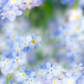 Fantasy gentle spring background blue flowers defocused forget me not floral Royalty Free Stock Photos