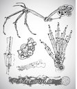 Fantasy monster wing, leg and hand with vintage mechanism in steam punk style